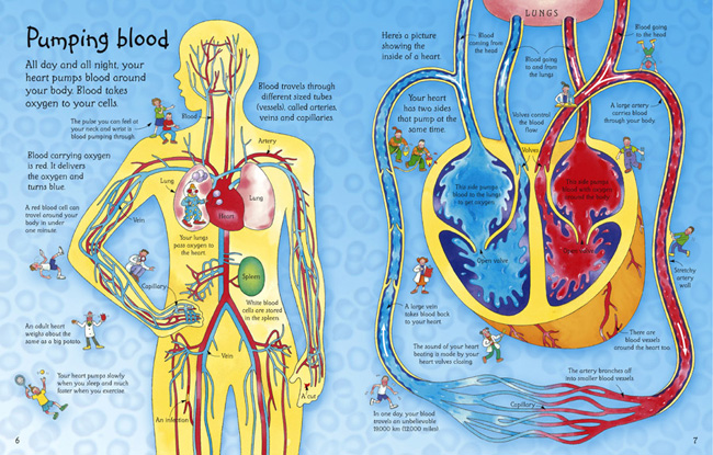 Pictures Of How The Inside Of Your Body Look - Collage -3798
